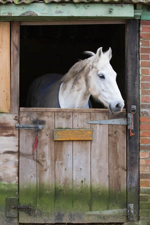 winter-horse-care
