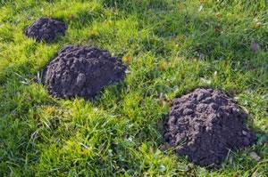 mole-hills
